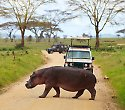 Southern Palms & Kenia-Kombisafari Out of Africa - ****Southern Palms Beach Resort
