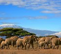 Super Kenia Hotel mit Safari durch 3 Nationalparks