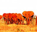 Baden am Shanzu Beach und Tsavo Safari - ****Emrald Flamingo Beach Club