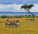 Travellers Club Kenia mit Big Five Safari - ***+Travellers Club