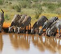 Kenia-Badeurlaub inkl. Familien Safari Abenteuer - ****Hotel & Club Leisure Lodge Resort